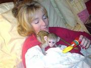MKI adorable little Wonderful Pygmy Marmoset and Capuchin 07031957695