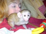 FHR  Adorable Twin Pygmy Marmoset and Capuchin 07031956739