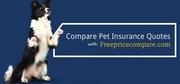 Compare Pet Insurance Quotes