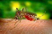 Yellow Fever Vaccine Birmingham